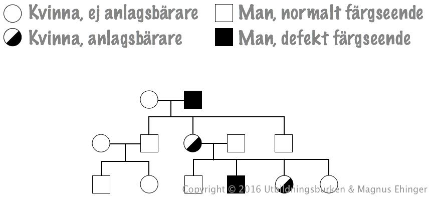 genetik biologi 1