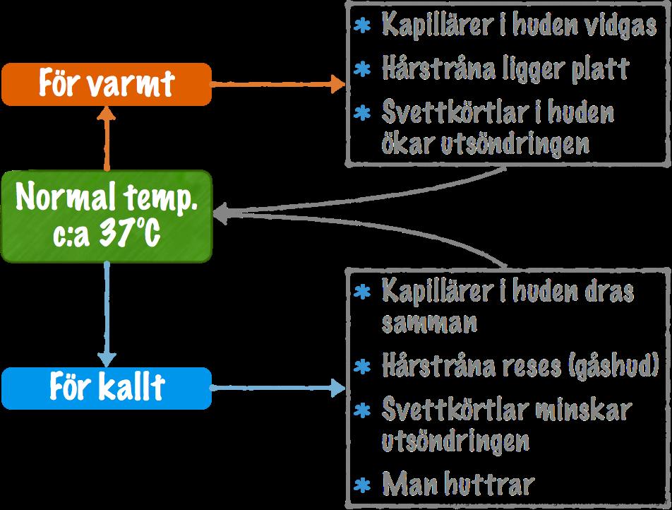 normal temperatur i kroppen