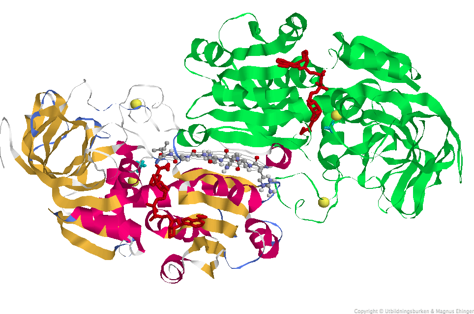 globulära proteiner