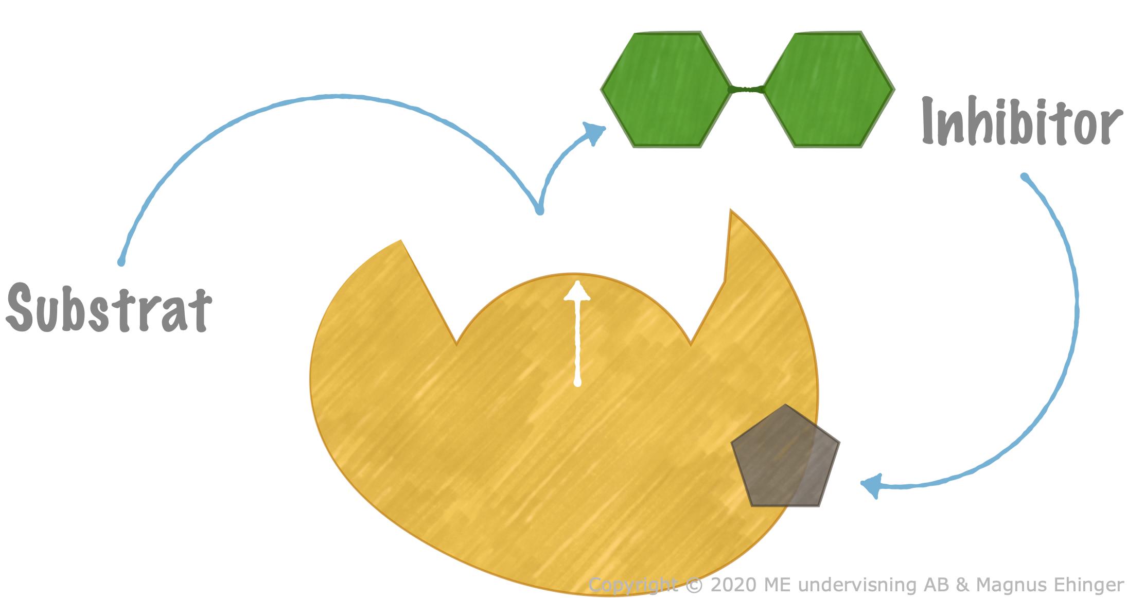 hur fungerar enzymer